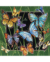 A garden filled with Butterflies!