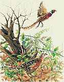 Pheasants - PDF: This realistic design features colorful pheasants in action in a rustic scene of the forest.  Incorporating beautiful autumn colors, a dynamic composition, this is sure to make anyone appreciate the splendor of the fall season. Give as a thoughtful gift for any autumn occasion or use as part of your Thanksgiving Day décor.