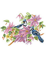 A pair of Blue Jays in the branches of a colorful Clematis bush in full bloom.