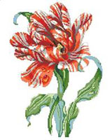 A magnificent red and white Striped Parrot Tulip is the center piece of this design by our own Barbara Baatz-Hillman. It would make a lovely companion piece to the Rose Beauty chart also by the same artist.
