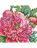 A Perfect Peony - PDF: Add timeless beauty to your space with this glamorous cross-stitch peony arrangement that features vibrant blooming flowers.