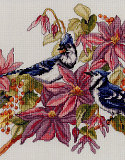 Blue Jays & Clematis: A pair of Blue Jays amongst the flowers.