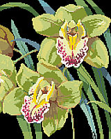 Exotic and elegant, Cymbidium orchids leap off the black background of this beautiful classic floral design by Nancy Rossi.